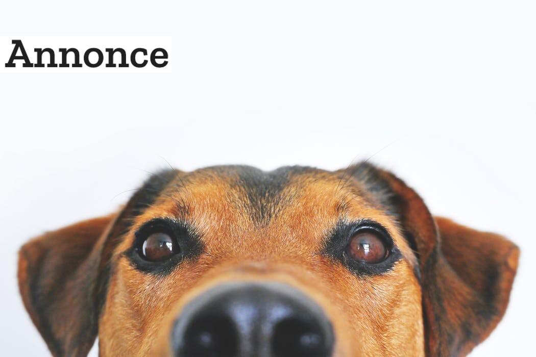 Kære hundeejer: Det er dyrt at have hund