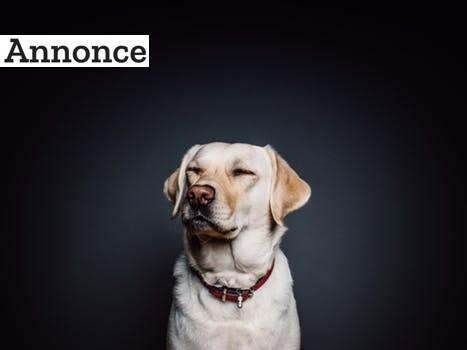 Giv din hund gode vilkår