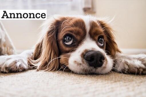 3 tips til at holde din hund sund