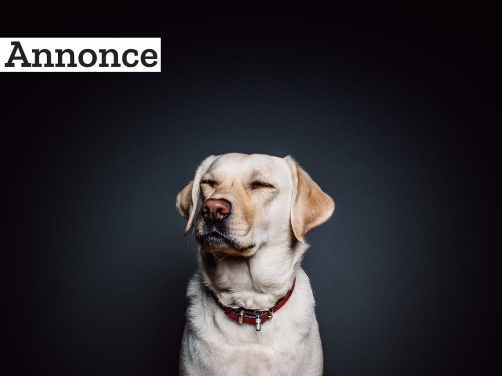 Huskeseddel til når din hund skal steriliseres