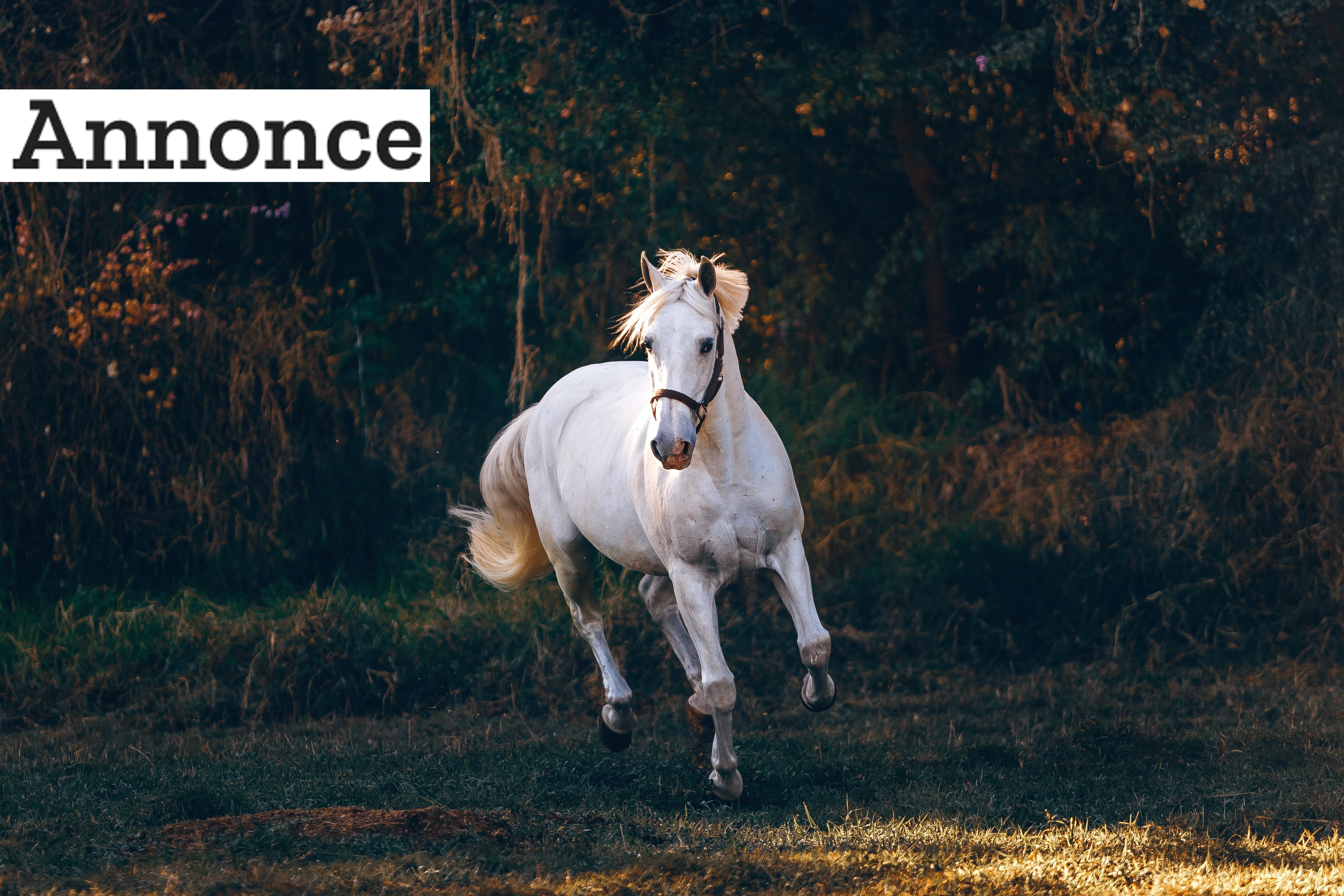Gode råd til den nye hesteejer