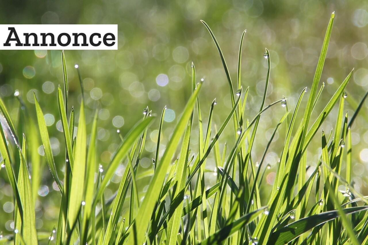 Sådan anlægger du ny græsplæne