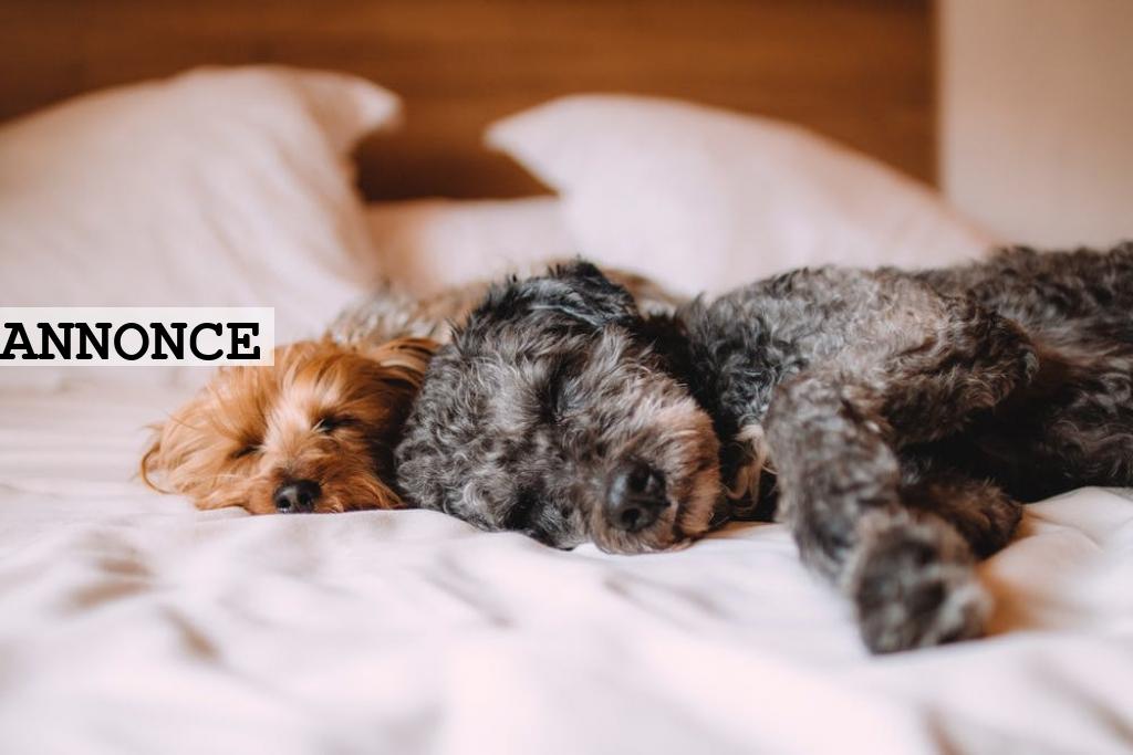 Få en meget bedre nattesøvn med 3 simple tips